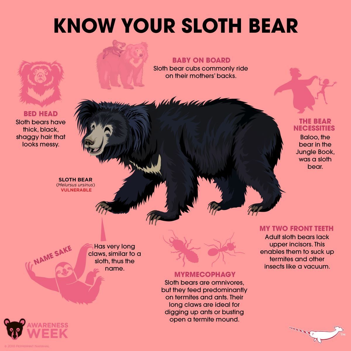 Know Your Sloth Bear