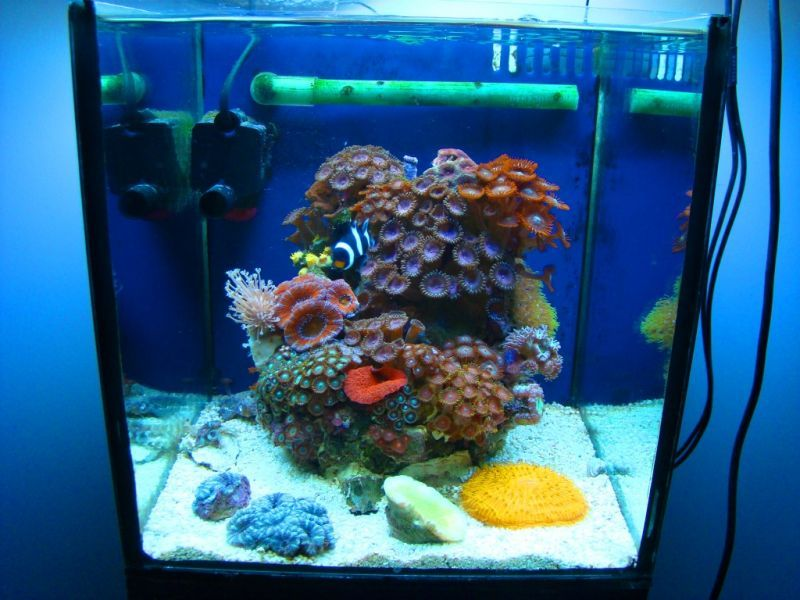 Pico reef 15l fish tanks pinterest aquariums fish for What do you need for a fish tank