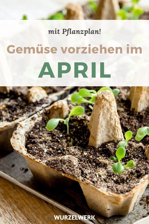 Gemüse vorziehen im April