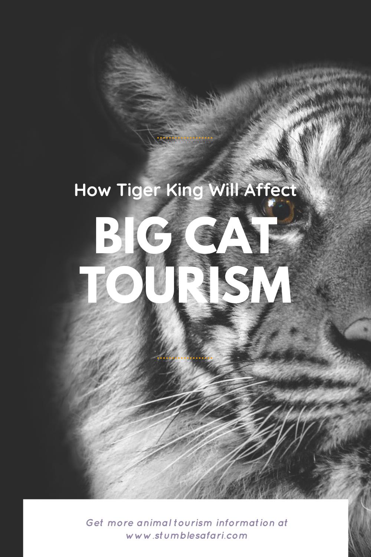 Pin on Best of Stumble Safari Travel