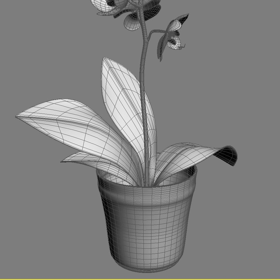 Realistic Orchid Flower Red Rose 3d Model 3d Model Orchid Flower Environment Concept Art