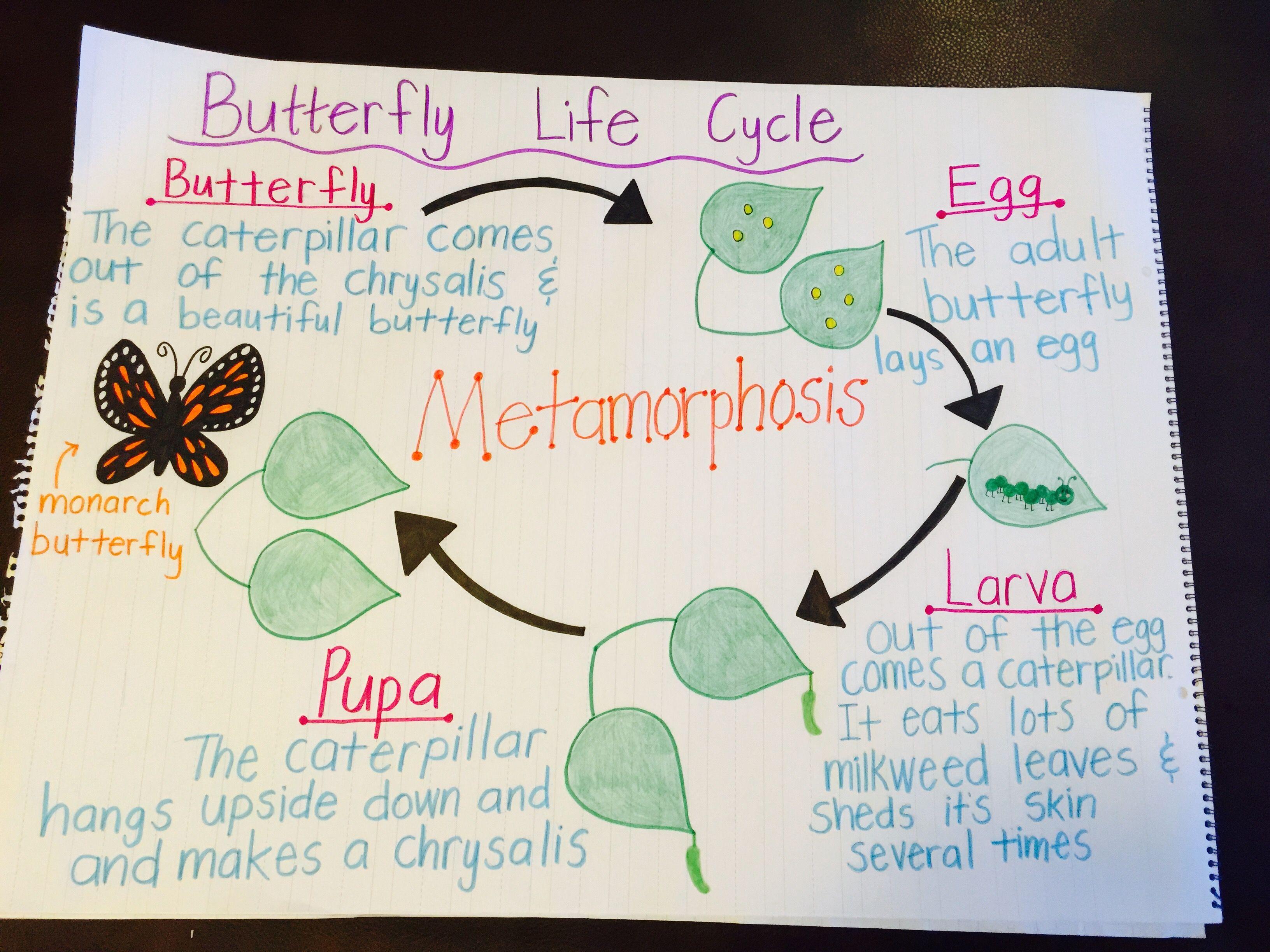 Metamorphosis Anchor Chart