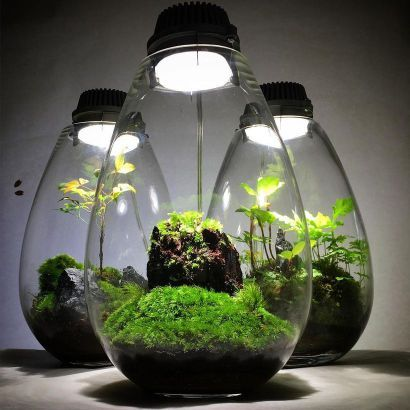 Bonsai Terrarium For Landscaping Miniature Inside The Jars 24. Moss  TerrariumAsian GardenThe ...