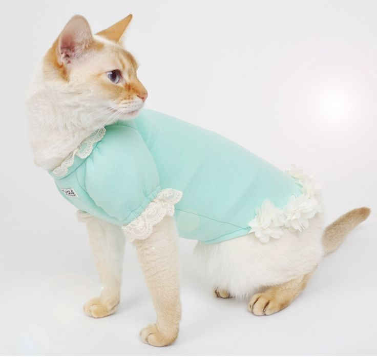Korea handmade pet fashion item, pet clothes, pet shirt, pet dress, pet fashion, dog clothes, cat clothes