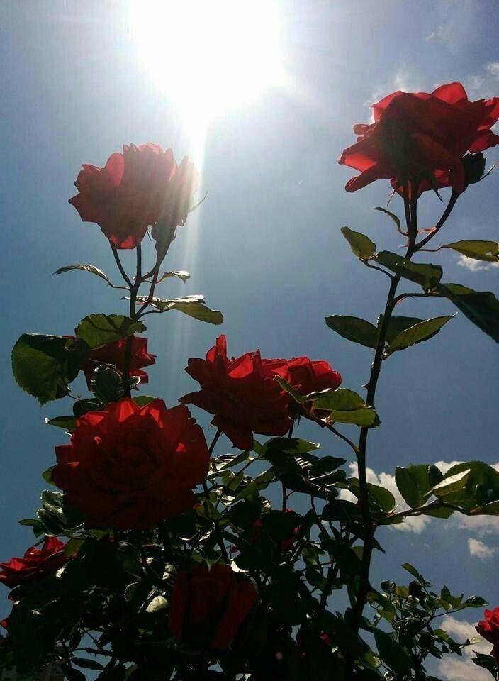 Light Blue Aesthetic Flowers