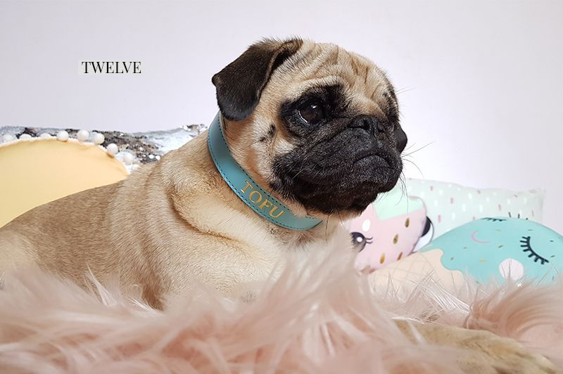2017 Holiday Gift Guide For Pugs The Fashionista Http Www