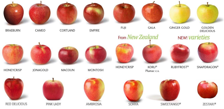 сорта яблок фото с названием и описанием искренне любила шелковое