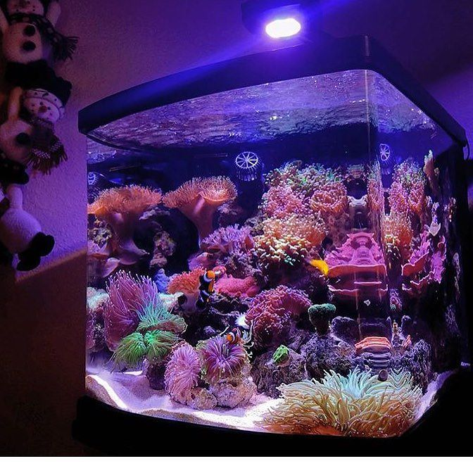 Loving These Coral Grow!! AWESOME