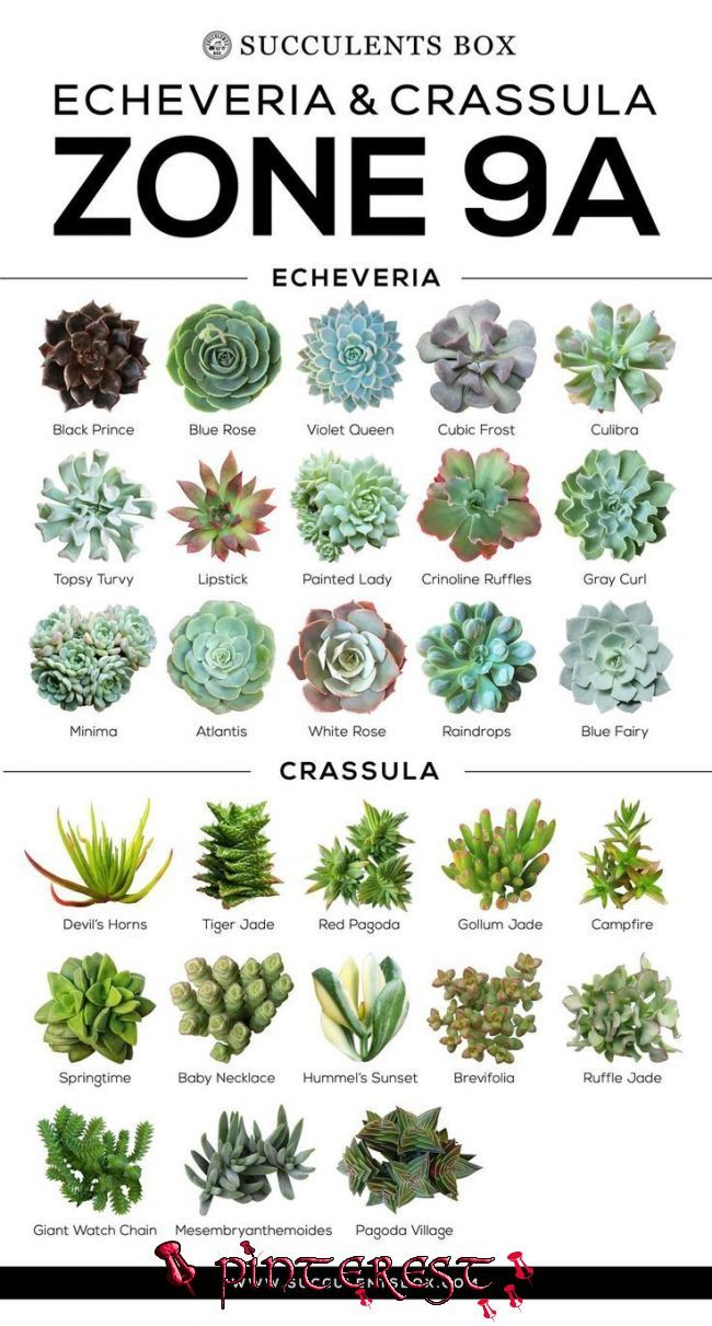 Photo of CHOOSING SUCCULENTS FOR ZONE 9 – CALIFORNIA, FLORIDA AND ARIZONA – #Arizona #California #Choosing #Florida #succulents #Zone | Types of succulents pla