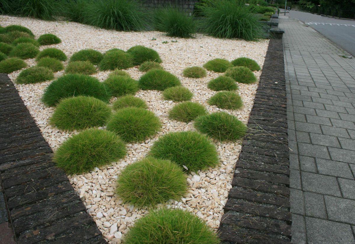 Minimalistische voortuin van yellow sun split en grassen aangelegd