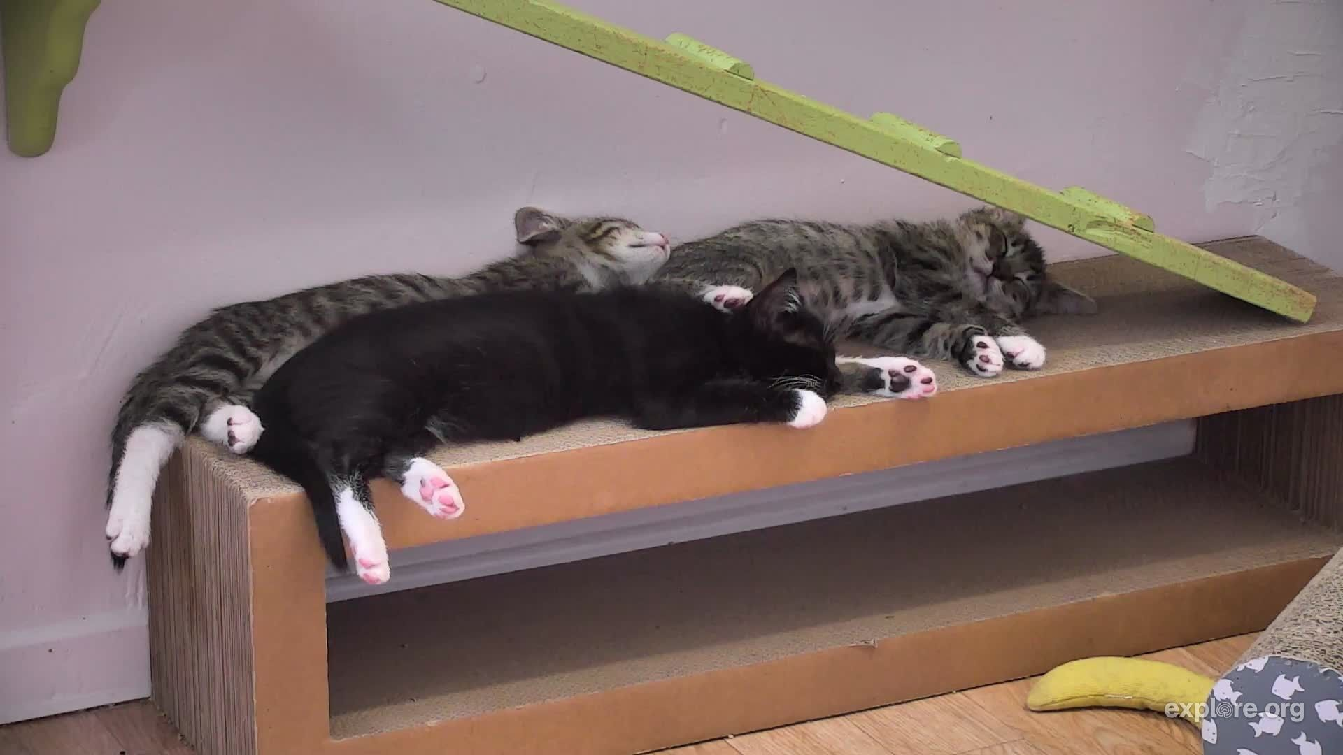 I'm watching the KittenRescue Cam on