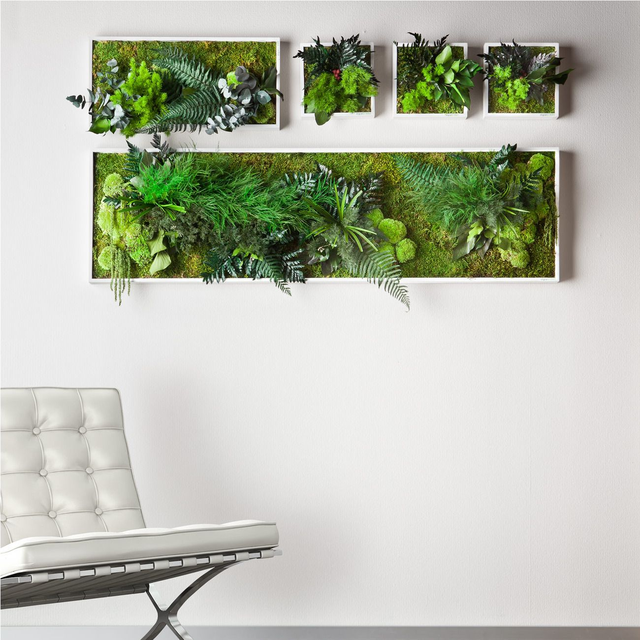 Echtpflanzenbilder Wand-Begrünung aus Echtpflanzen. Speziell ...