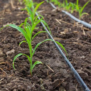 Como instalar un sistema de riego en el huerto huerto y - Sistema riego goteo ...