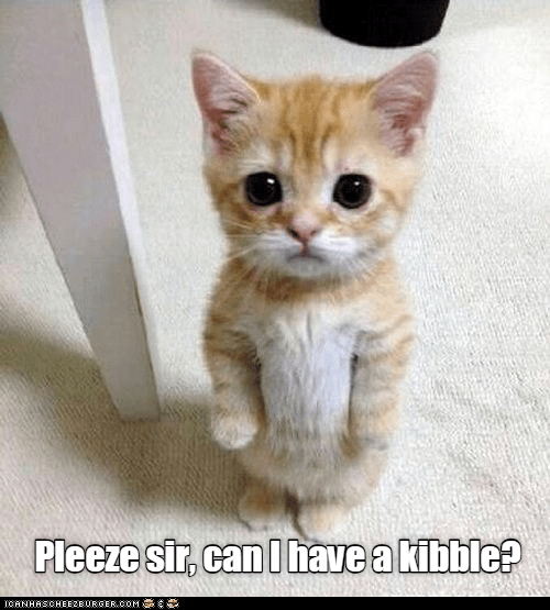 Top 28 Memes Of The Week Cheezburger Users Edition 76 With Images Cute Kitten Meme Super Cute Kittens Cat Quotes Funny