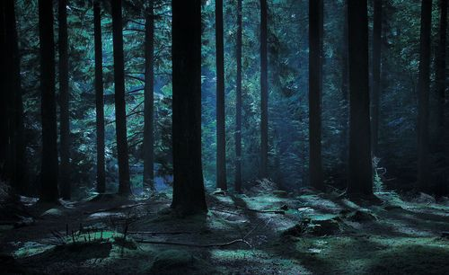 The Woods At Night Okehampton England Gb Night Forest Scenery Wallpaper Anime Scenery Wallpaper