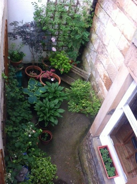 Aerial view of our basement garden in June - hostas, sweet box, climbing hydrangea, ivy and black elder. Starting to look quite good from up above, but the challenge is the view from the windows.