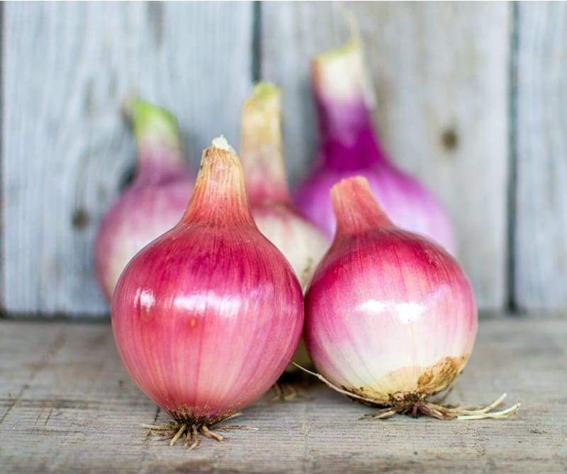 200 Seeds Onion Red Creole//Vegetable Garden Vegetables Plants