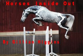 Gillian Higgins from Horses Inside Out does fantastic work - a great way to learn more about how your horse really moves
