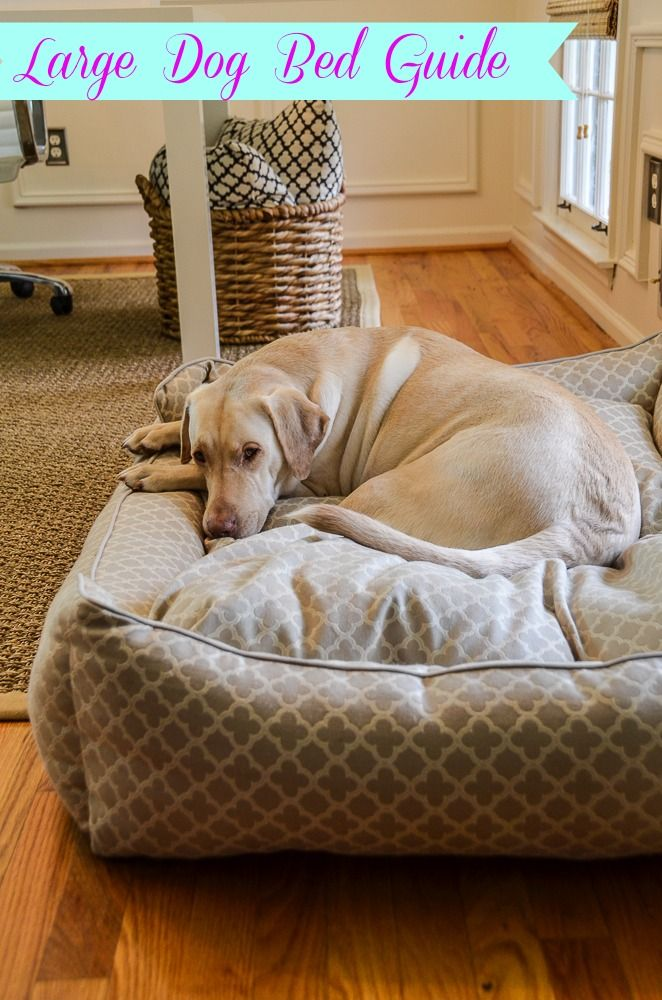 just found this orthopedic dog beds - super-absorbent bolster dog