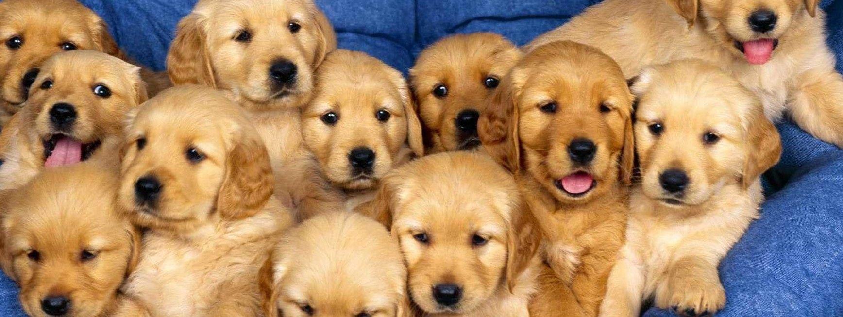 Dog food bargains dogs dog food recipes shih tzu