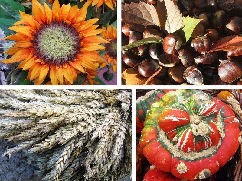 Sonnenblume,Dekoration,Bilderrahmen,Herbst,Ernte,Erntedank,orange