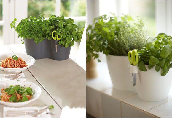 post muy completo sobre como cultivar plantas arom ticas