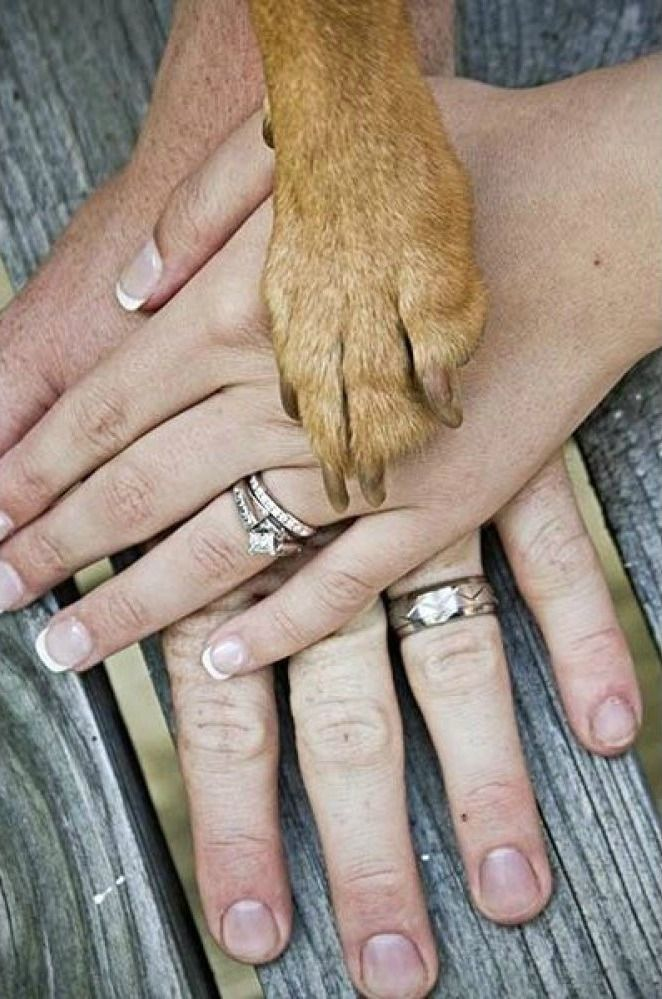 Snap a sweet pic with your puppy on the wedding day   Gambol Photography