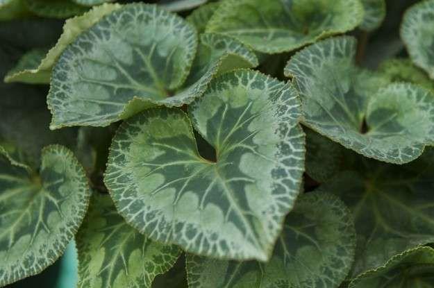 27++ Planta con hojas de corazon inspirations