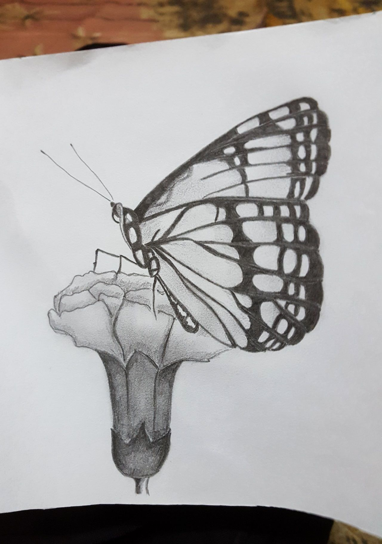 Coloring Pictures Of Flowers And Butterflies Beautiful Arts Drawings Butterfl Beautiful Pencil Drawings Beautiful Butterfly Pictures Pencil Drawings Of Flowers [ 1820 x 1280 Pixel ]