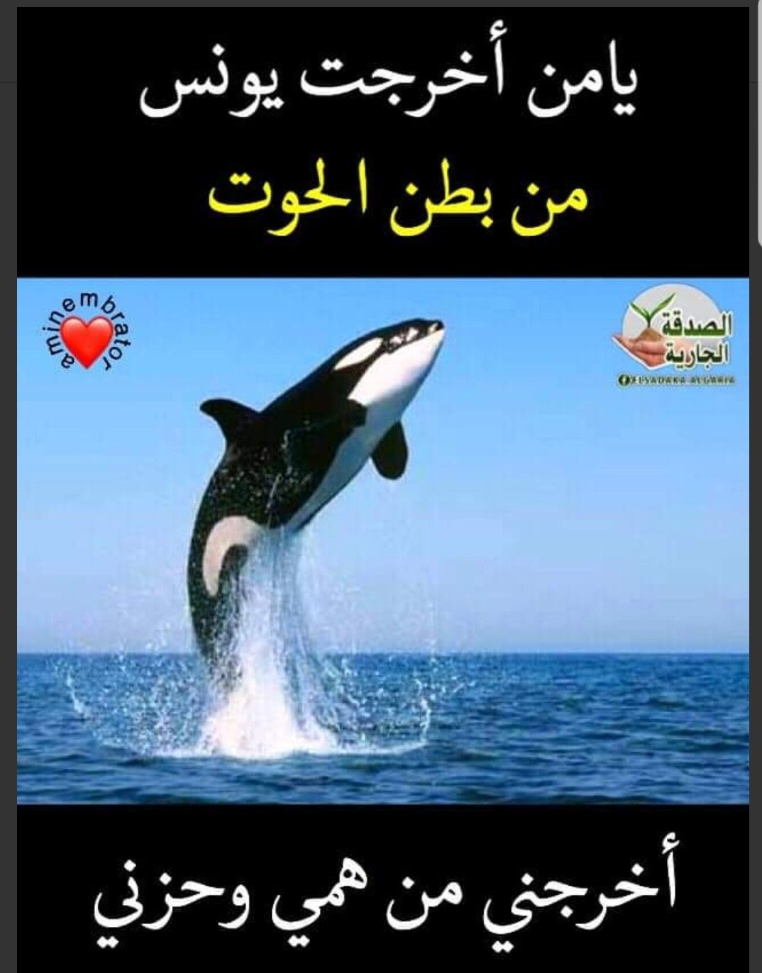 Pin By The Noble Quran On Coran Animals Islam Whale