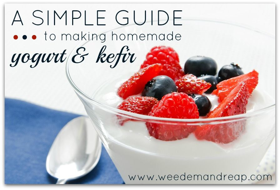 Weed em and Reap: A Simple Guide to making homemade Yogurt & Kefir