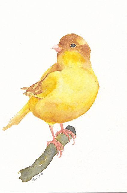 Yellow canaries,Bird art Original watercolor painting,nature lover unique gift