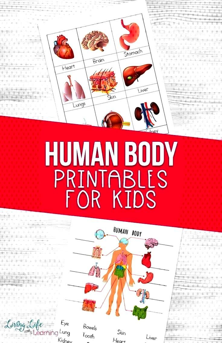 the human body? I created these human body printables for kids so I could introduce them to the maj