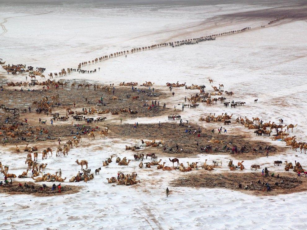 Caravanas, Etiopía   Photo: George Staynmits   Foto de los tiempos bíblicos. Caravanas llegan a las minas de sal del lago Assal. Trozos de sal que durante siglos había circulado en toda Etiopía como una unidad monetaria.
