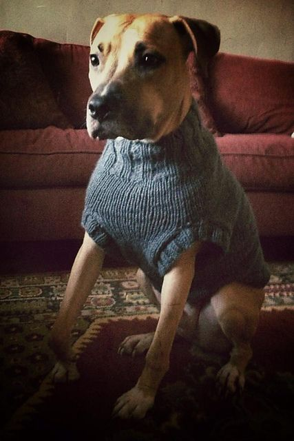 The Ozzie large dog sweater pattern by Jenna Greer | Hundebekleidung ...