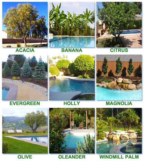 Best Worst Trees To Plant Around A Pool Inground Pool Landscaping Pool Landscaping Plants Landscaping Around Pool
