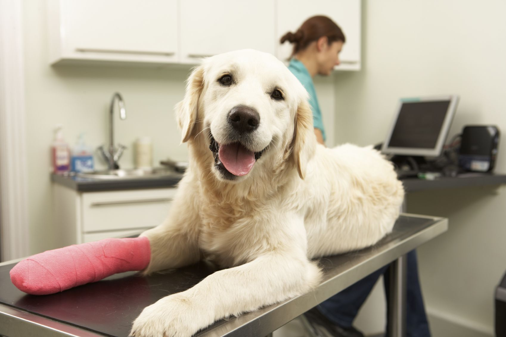 Emergency Pet Care You Can Count On Pet insurance, Pet