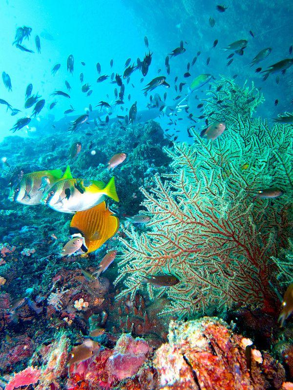 Coral, Koh Tao, Thailand