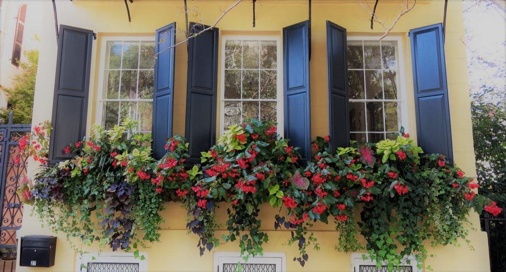 The Best Cascading Flowers For Window Boxes Window Box Plants