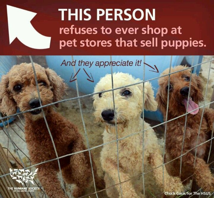Yes I Am This Person Say No To Greedy Breeders No To Cruel Puppy Mills Adopt Don T Shop Pet Store Foster Dog Animal Advocacy