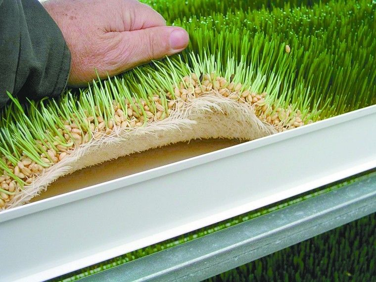 Greenhouse Feeds Gaining Ground In Livestock Industry
