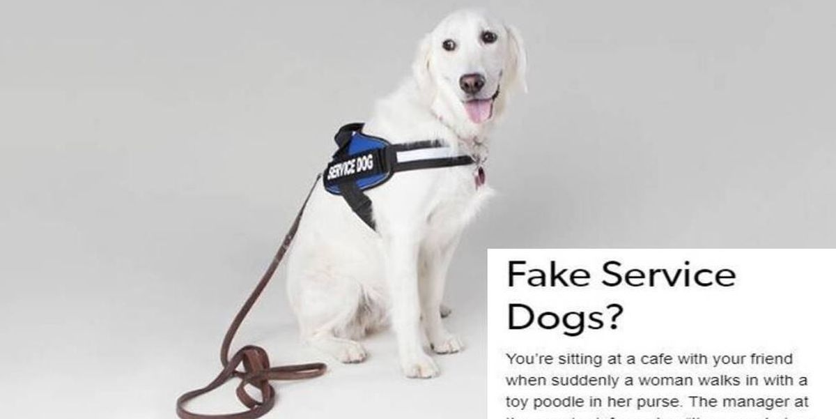 A Disabled Woman S Post On Fake Service Animals Perfectly Explains Why It S A Big Problem Service Animal Psychiatric Service Dog Service Dogs