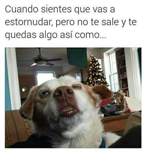 Perros Graciosos Http Enviarpostales Es Perros Graciosos 223 Perros Animales Memes New Memes Best Memes
