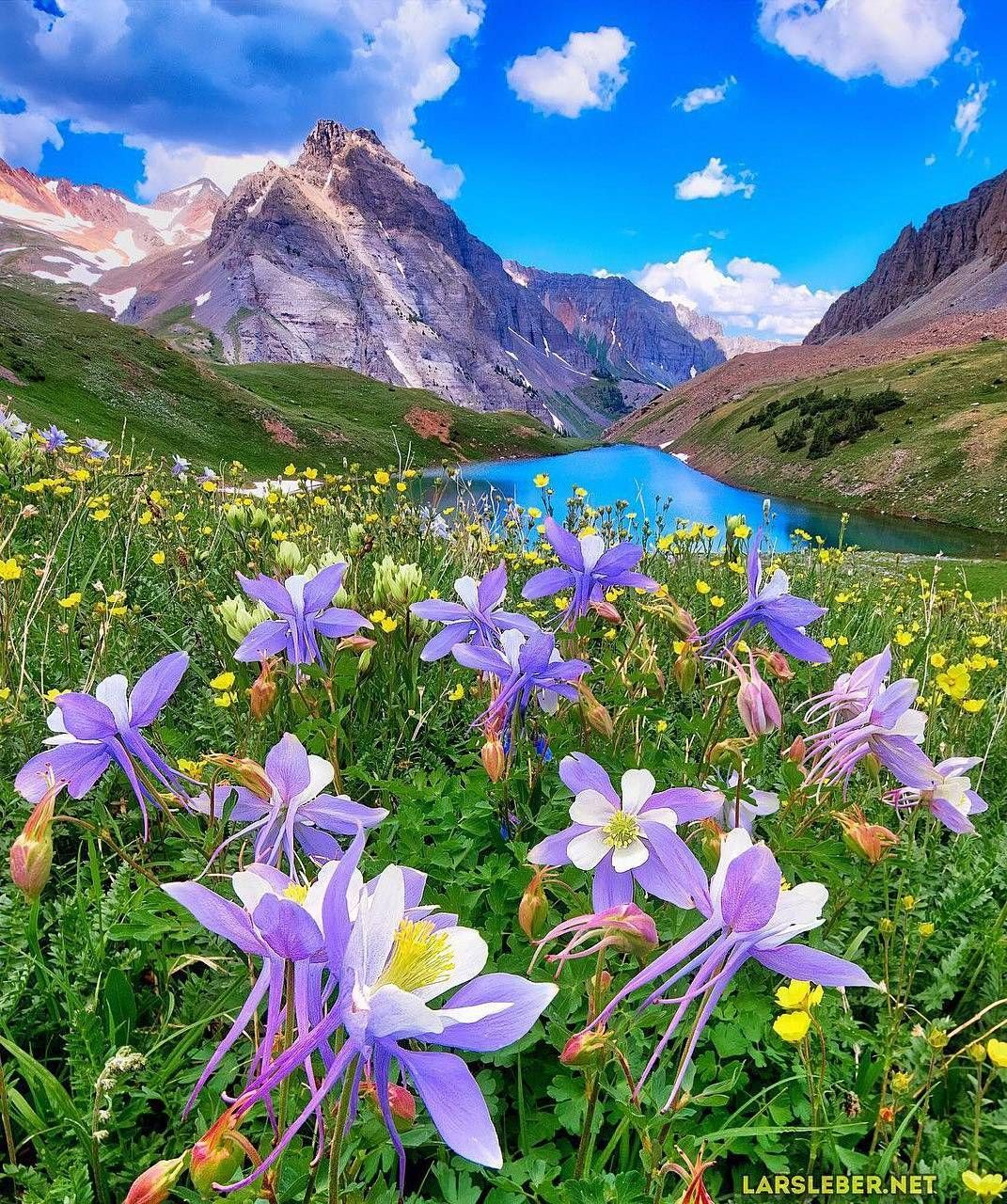 beautiful flower front mountain