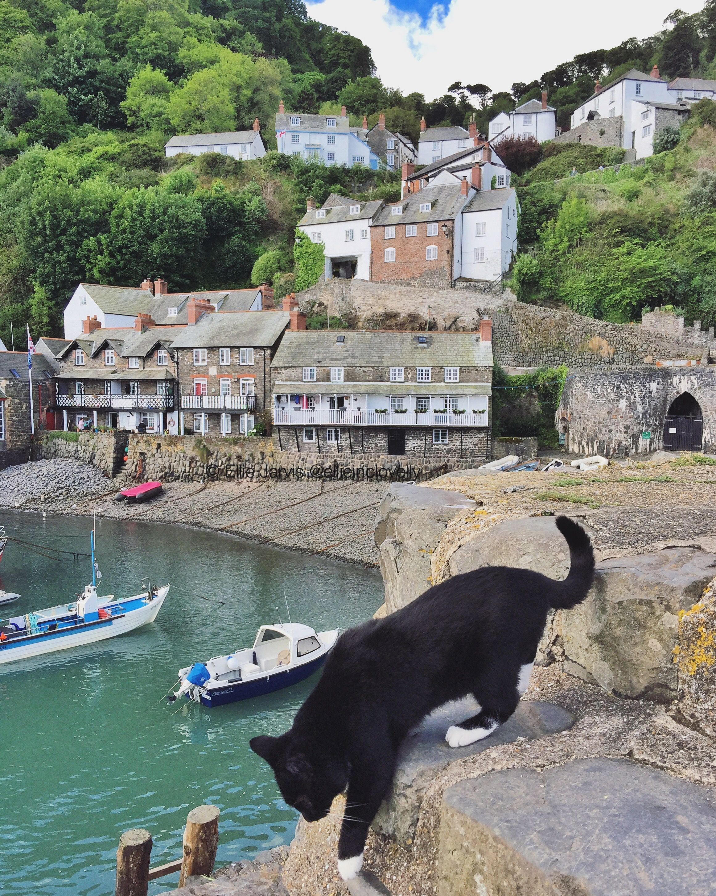 Our Harbour Kitty Home Sweet Home Kitty Feline Cats Meow