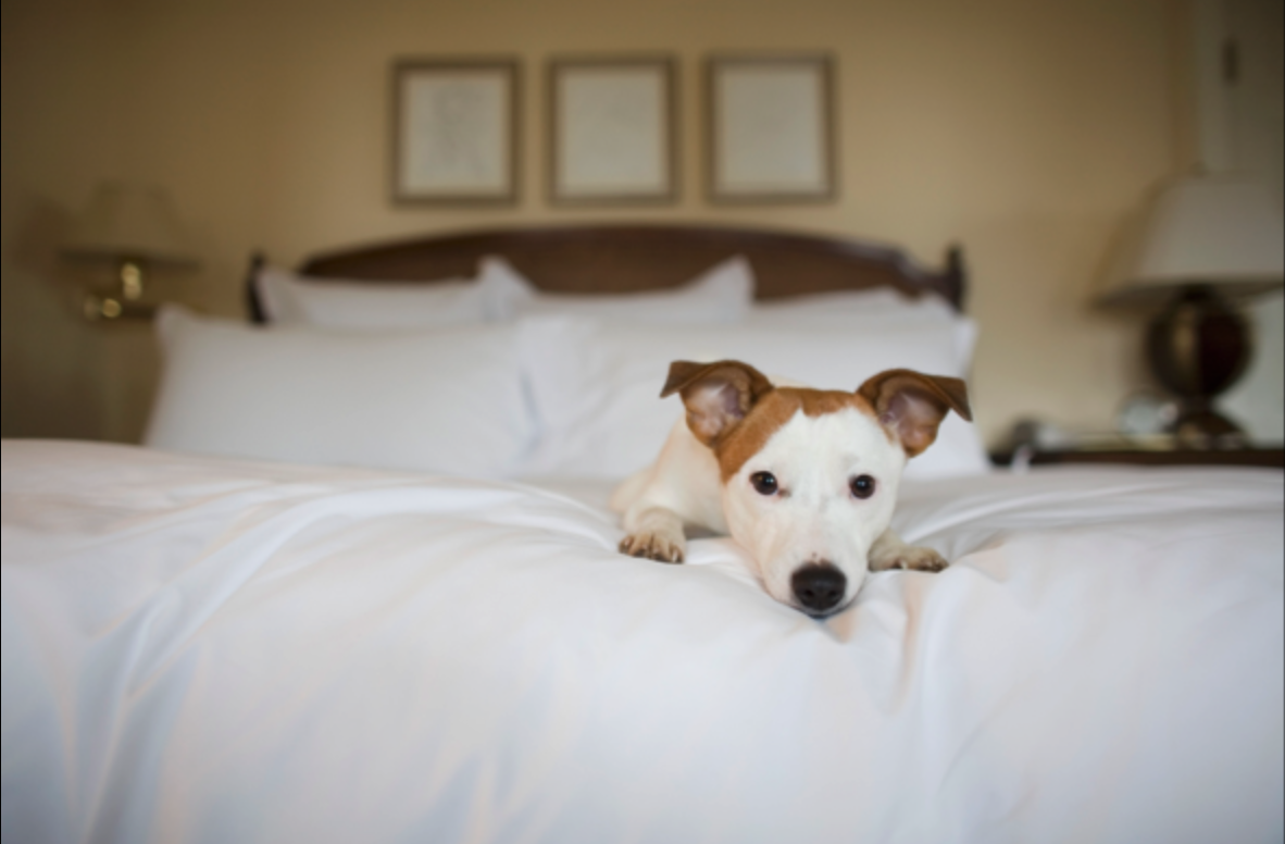 The Waverly has a Pet Friendly policy? We can't wait to meet your furry friends!