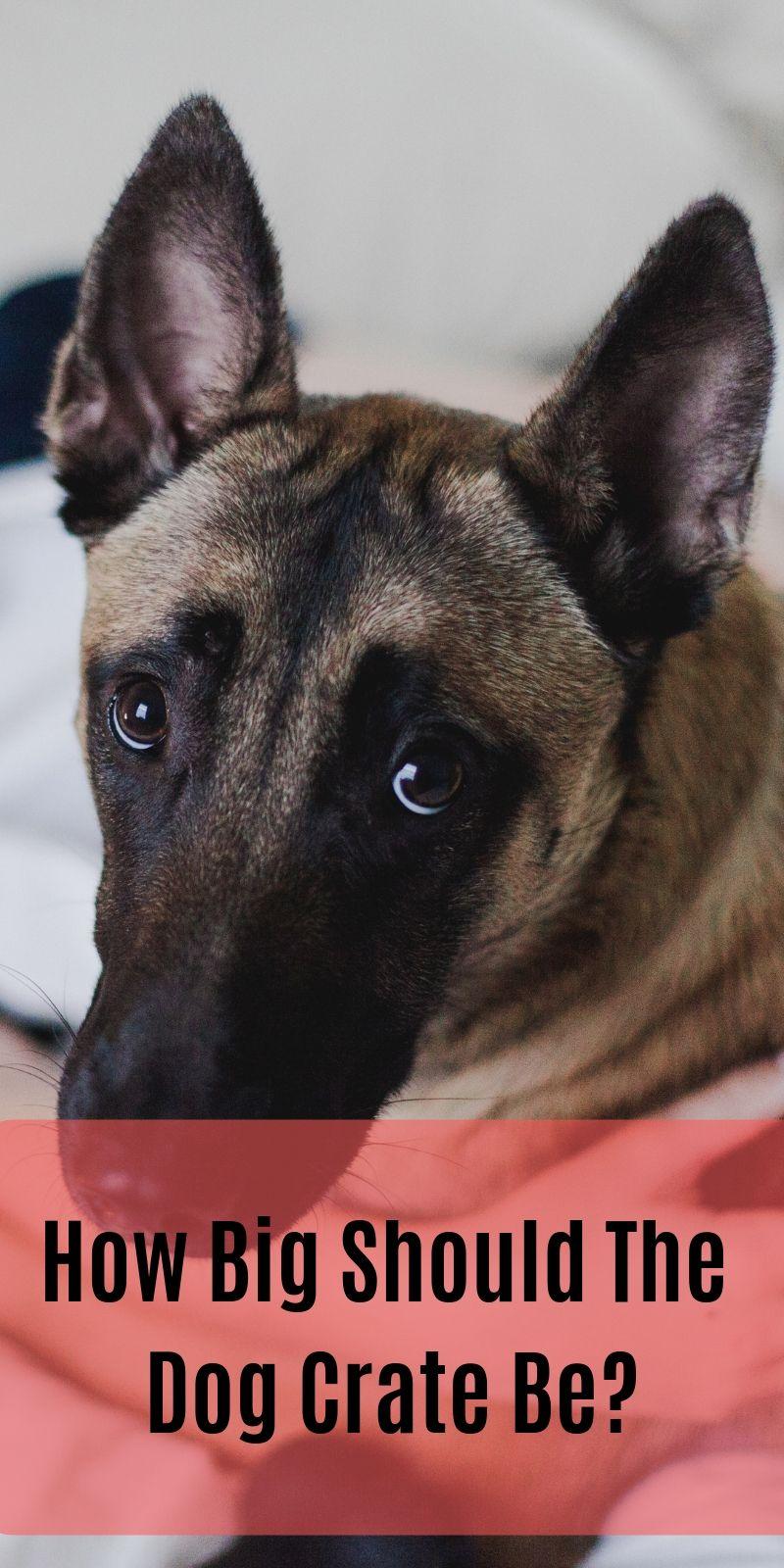 Facebook T Shirt Pitbull Terrier Bull Terrier Puppy Dog Crate