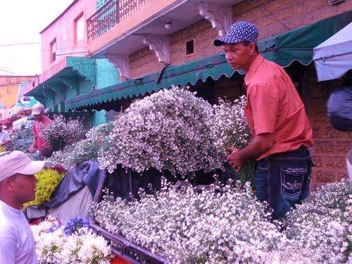 El vendedor de flores, Santiago de los Caballeros
