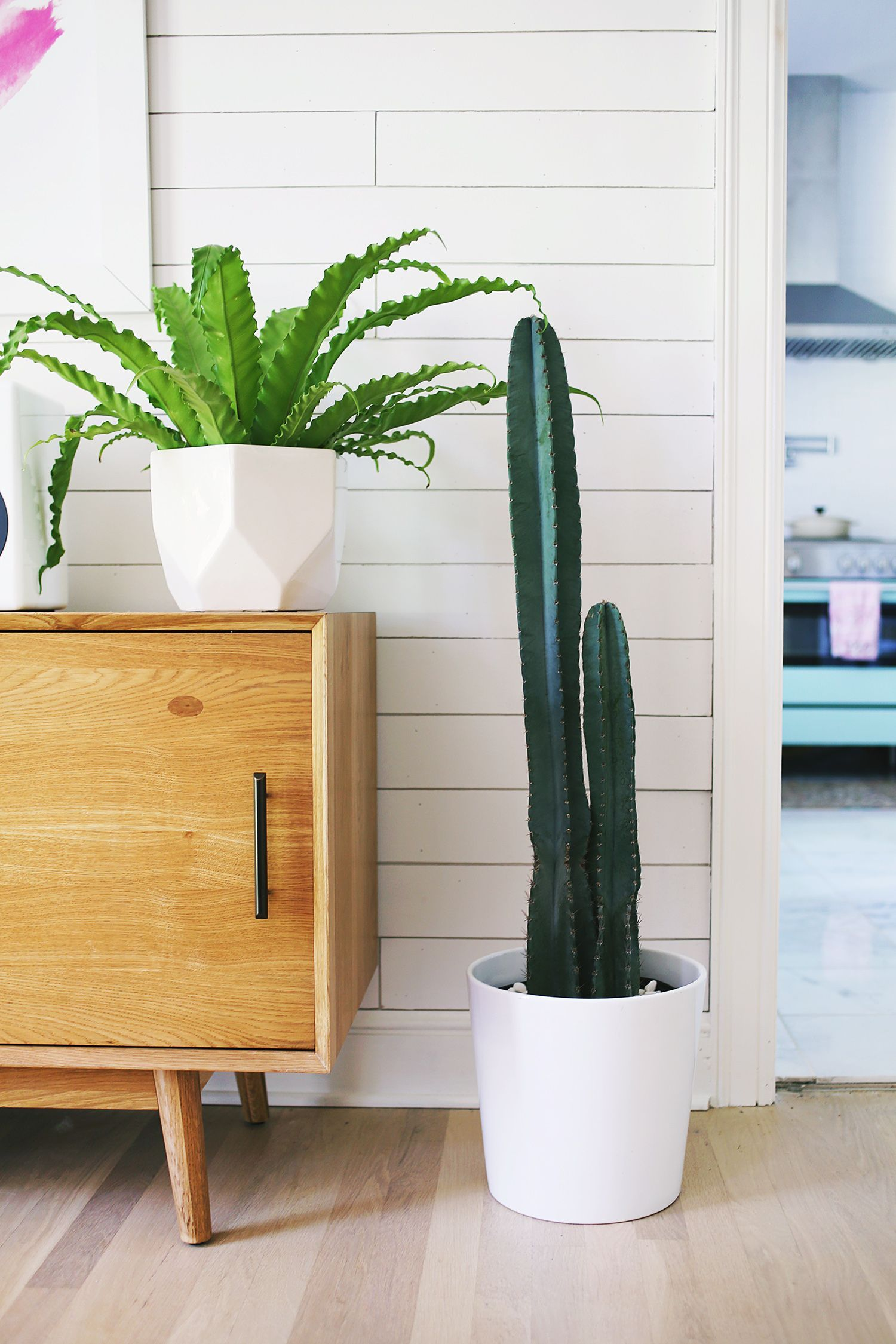 Five Easy To Care For Houseplants A Beautiful Mess Tall Cactus Trending Decor Plants