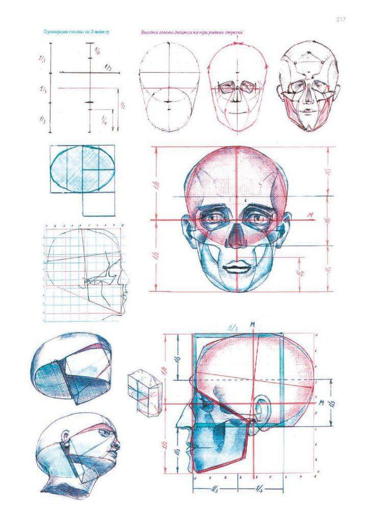 анатомия лица человека для художников картинки позволяет сделать